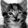 Caut fata care are nevoie de colega de apartament - last post by mada69