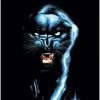 blkpanther