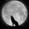 Picatura de intelepciune - last post by xtreme89